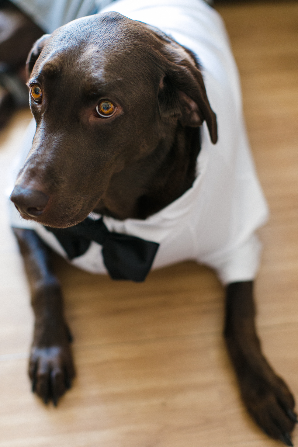 Oh my, what a charming bistro wedding with two charming grooms and their cute dogs (Photos by Frankie & Marilia) (17)