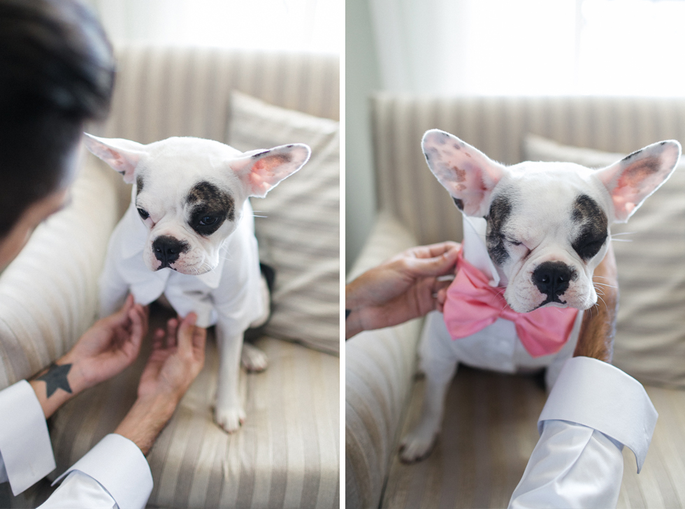 Oh my, what a charming bistro wedding with two charming grooms and their cute dogs (Photos by Frankie & Marilia) (9)